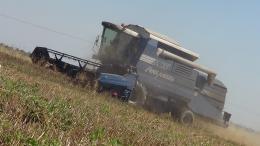 Koszenie pszenicy 2013 w Olszanach