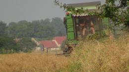 Rzepakowanie 2013 w Olszanach