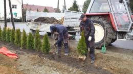 Sadzenie krzewów